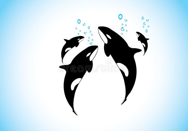 Семья дельфин-касаток плавает & дышающ совместно внутри океана иллюстрация штока