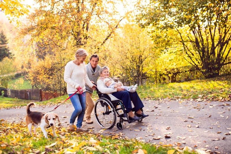 Семья из нескольких поколений с собакой на прогулке в природе осени стоковые изображения rf