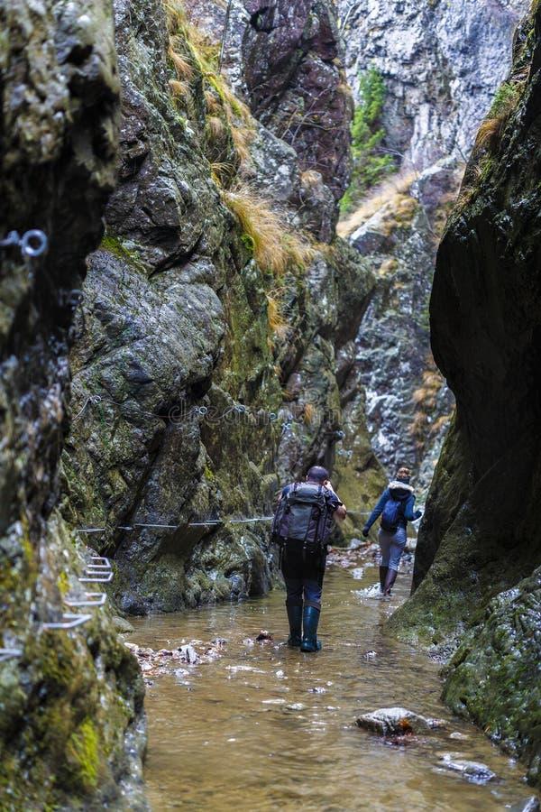Семья идти hikers стоковое изображение rf