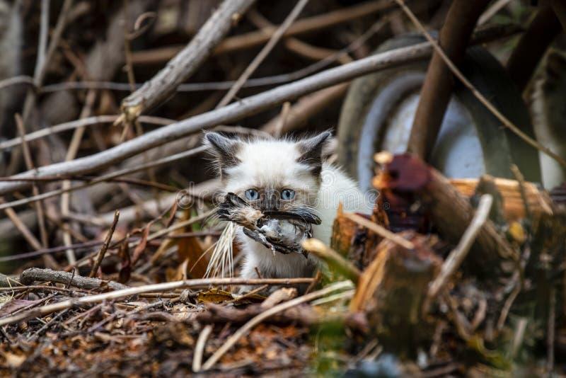 Семья кота улицы, бездомный котенок стоковая фотография