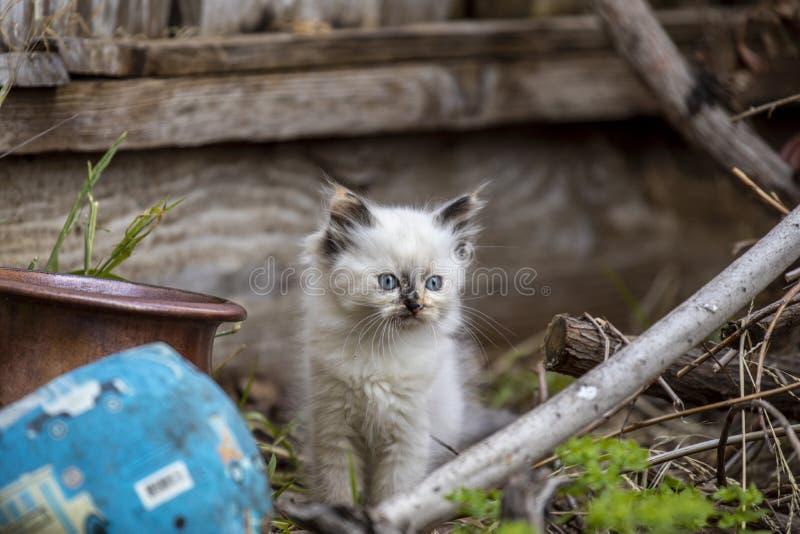 Семья кота улицы, бездомный котенок стоковые изображения rf