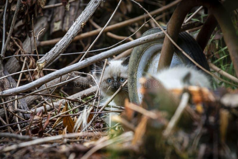 Семья кота улицы, бездомный котенок стоковая фотография rf
