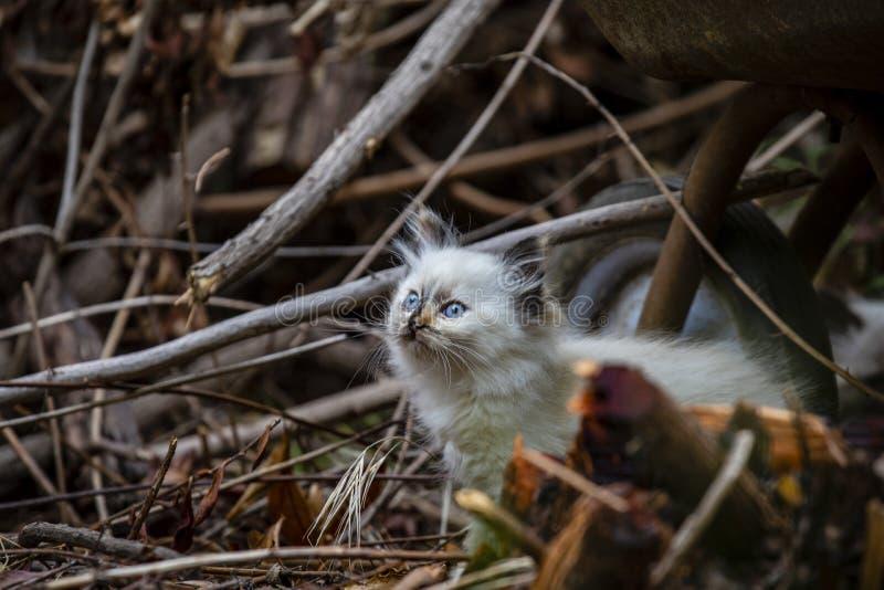 Семья кота улицы, бездомный котенок стоковое фото