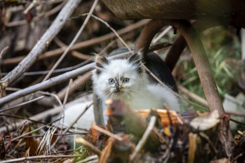 Семья кота улицы, бездомный котенок стоковые изображения