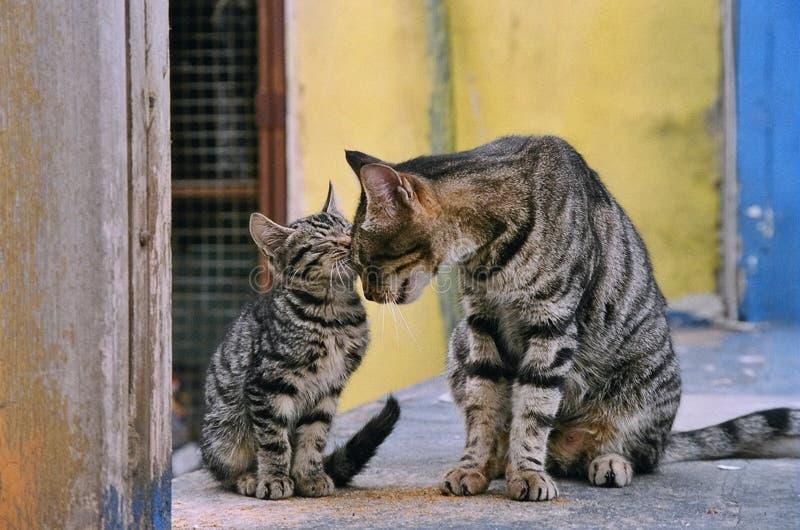 семья кота стоковая фотография rf
