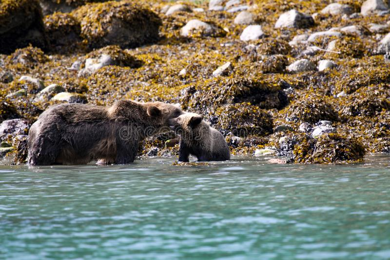 Семья медведя стоковая фотография rf