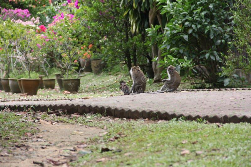 семья младенца холит ее мать обезьяны macaque стоковое изображение rf