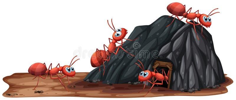 Семья муравьев живя в отверстии иллюстрация штока