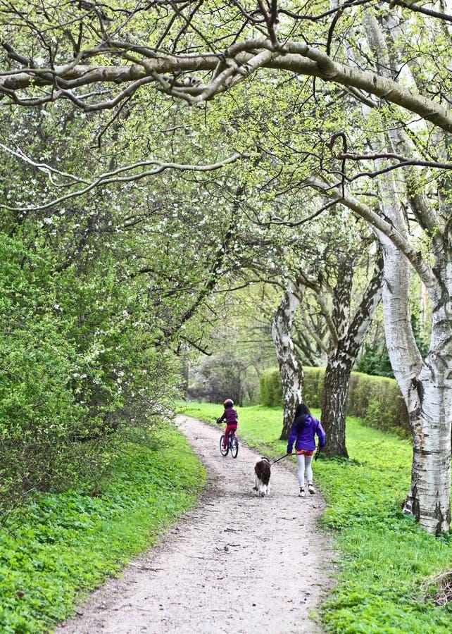 Семья на пути весной стоковые фото