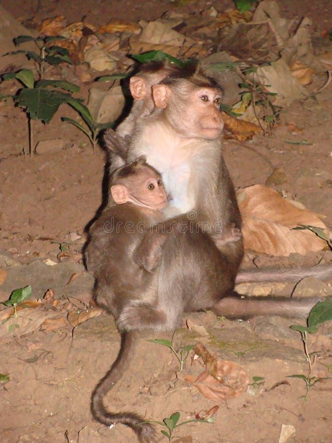 Семья обезьяны стоковые изображения