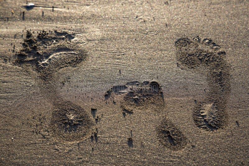 Семья следа ноги стоковая фотография rf