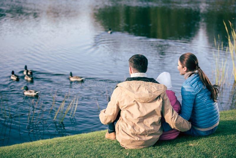 Семья смотря озеро с утками стоковые фотографии rf