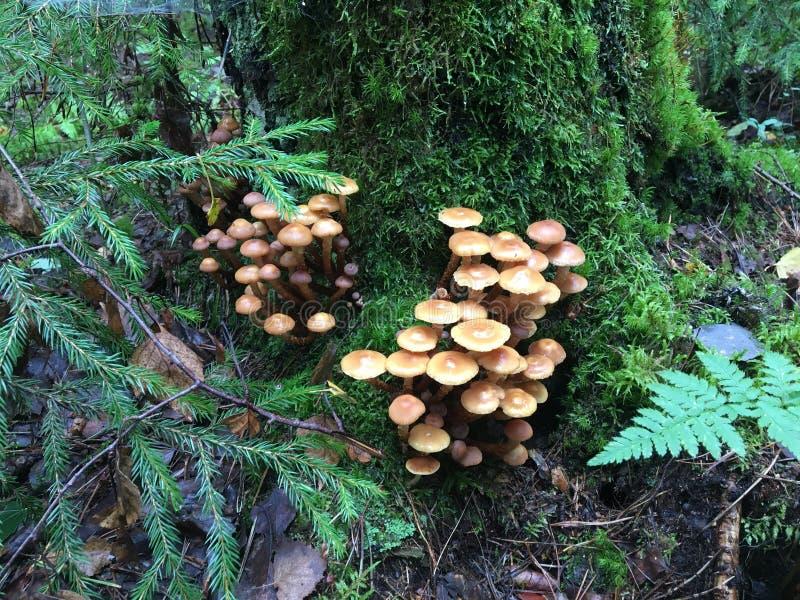 семья смолола много грибов там стоковое изображение