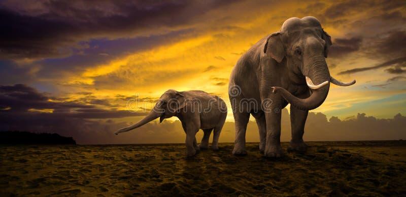 Семья слонов на заходе солнца