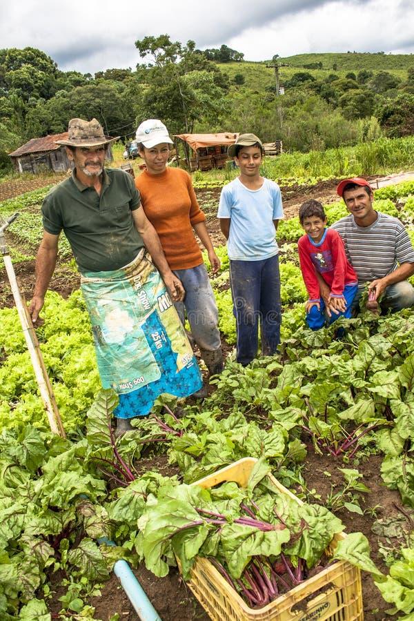Семья фермеров в плантации свеклы стоковые фото