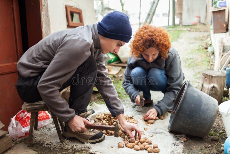 Семья фермеров задавливая грецкие орехи стоковые фотографии rf