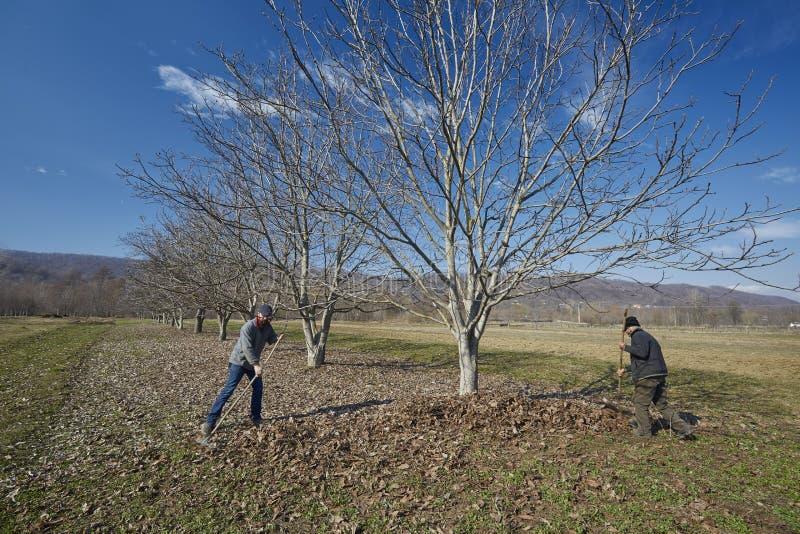 Семья чистки весны фермеров стоковое изображение