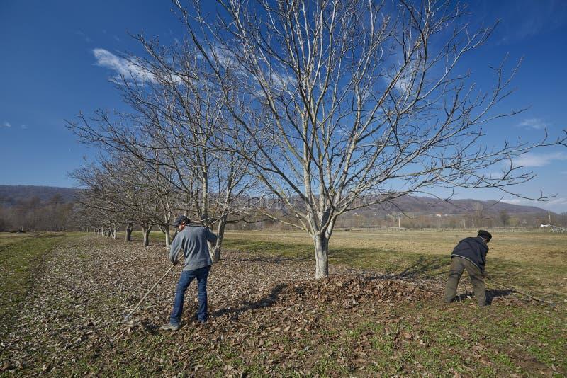 Семья чистки весны фермеров стоковые фотографии rf