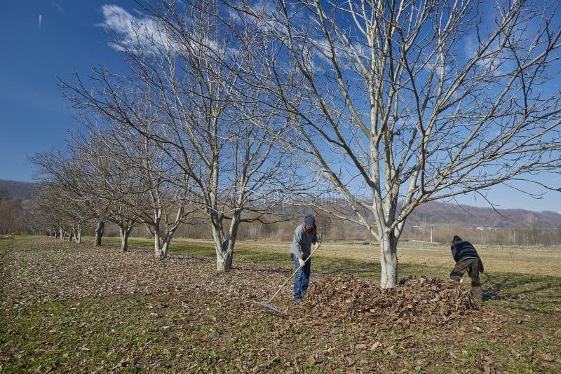 Семья чистки весны фермеров стоковое фото
