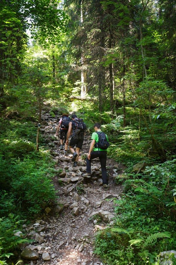 Семья Hikers идя гористый на следе стоковое фото rf