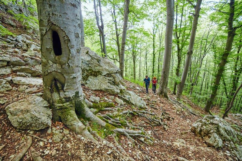 Семья hikers на горной тропе стоковые изображения rf