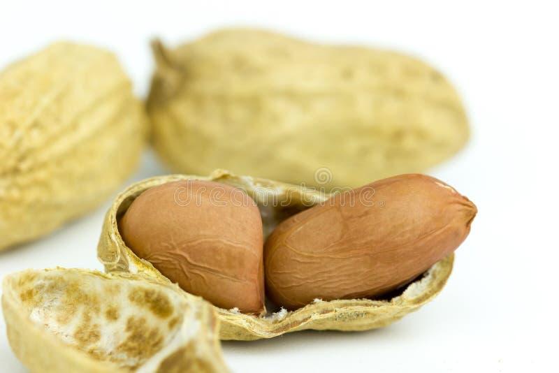 Семя арахиса на белой предпосылке стоковые фотографии rf