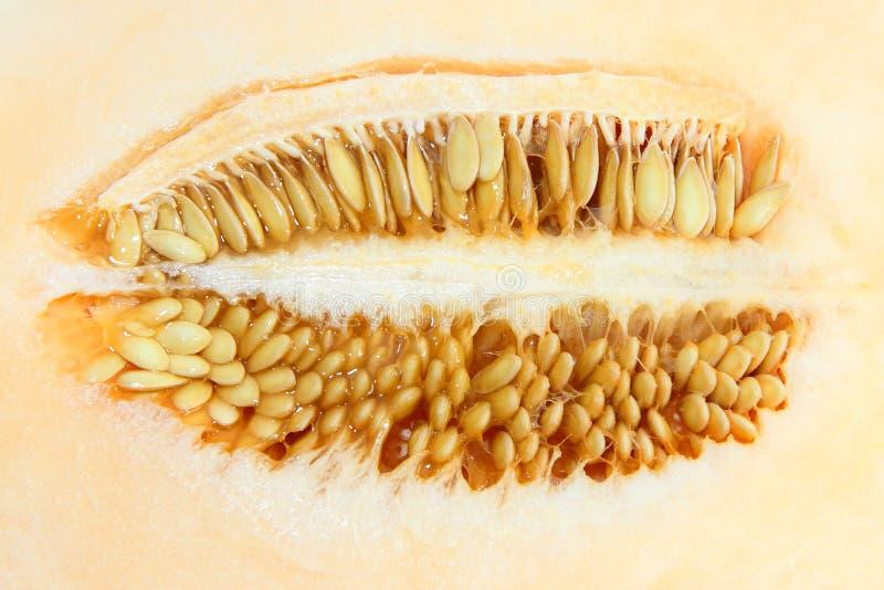 Семя канталупы дамы Солнця стоковая фотография