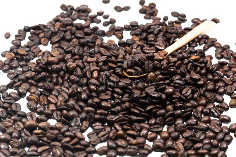 семя кофейного зерна в деревянной ложке на белой предпосылке, кофе стоковое фото