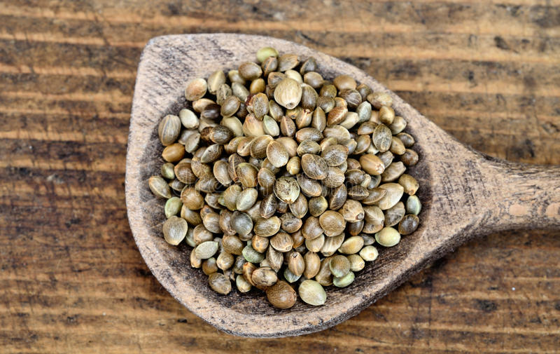 Семя пеньки в ложке на таблице стоковые фото