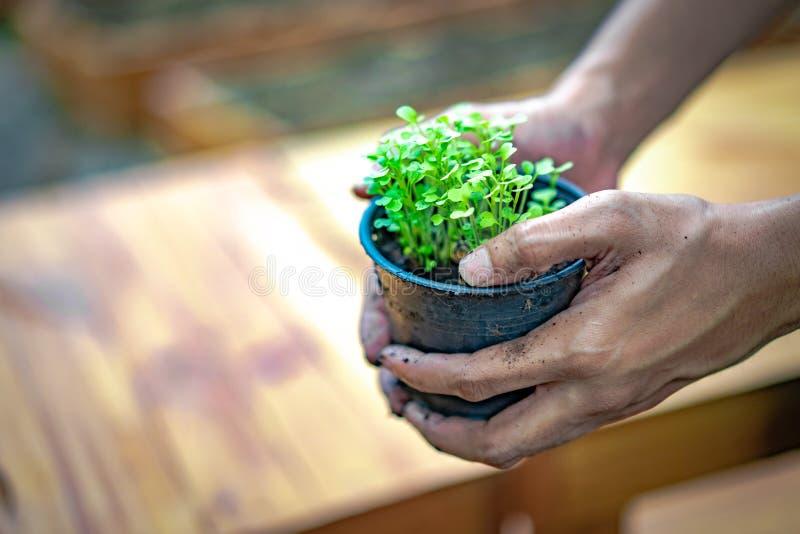 Семя, семена, засаживая, рука, почва, завод, земледелие, фермер, осеменяя, рост, сад, земля, свиня, грязь, жизнь, овощ, стоковое фото rf