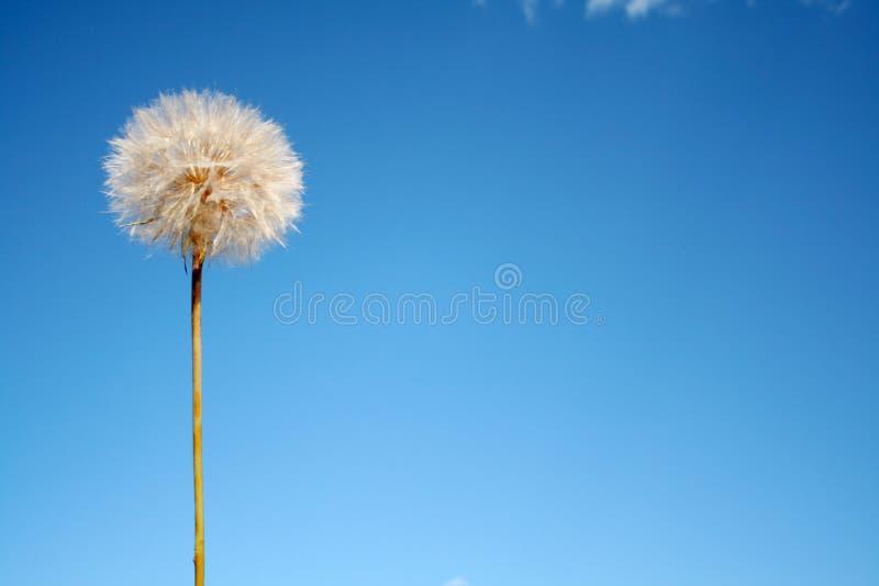 семя слойки стручка Стоковые Фотографии RF