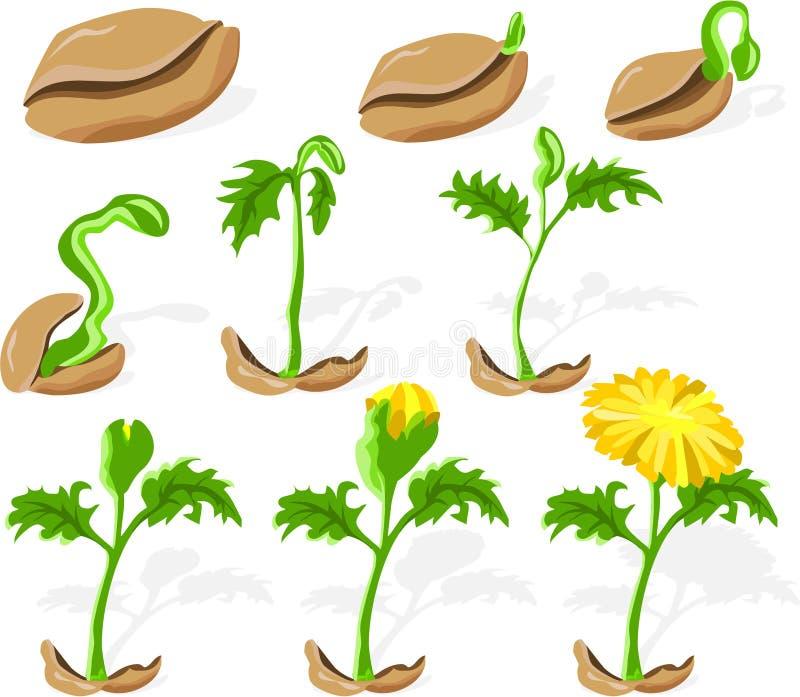 картинки семя росток цветок с бутоном цветок раскрылся садоводов всего