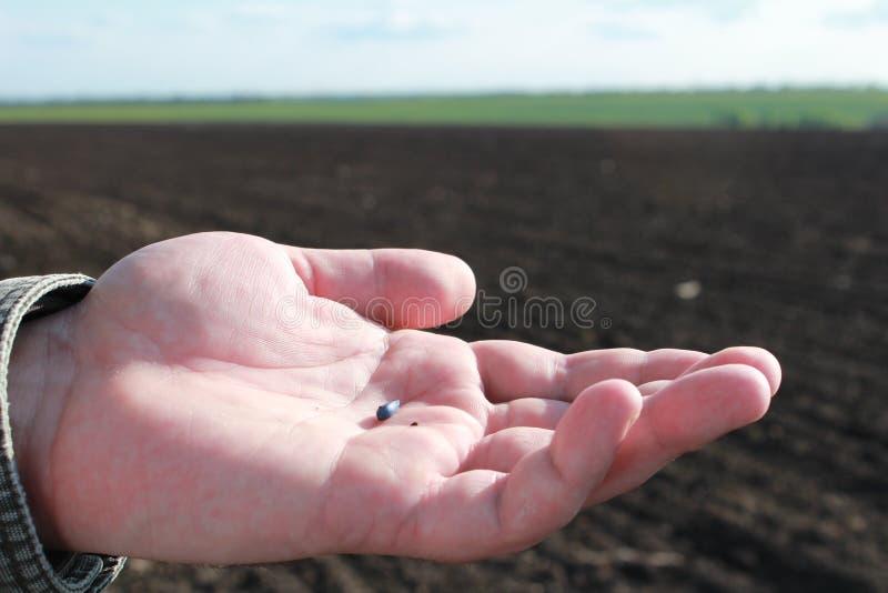 семя стоковая фотография