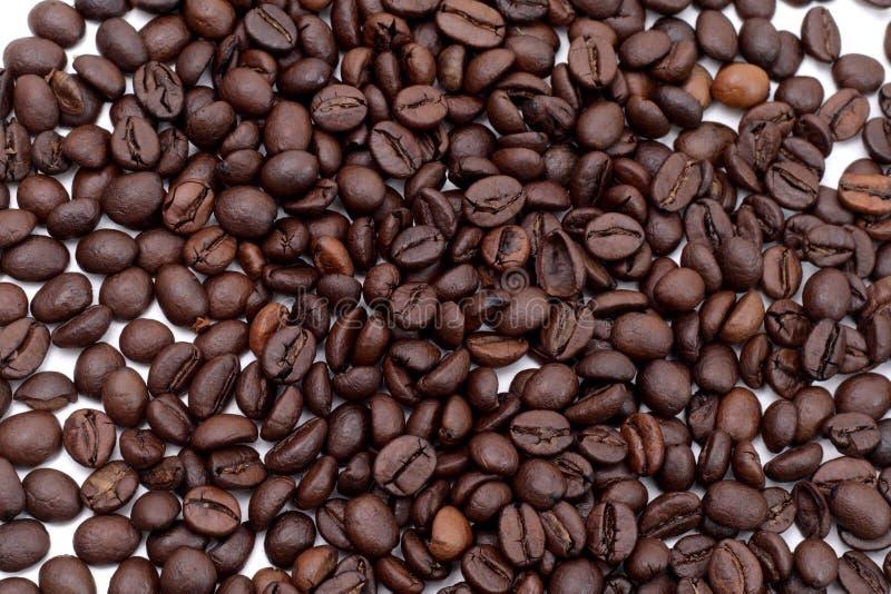 семя cofee стоковая фотография