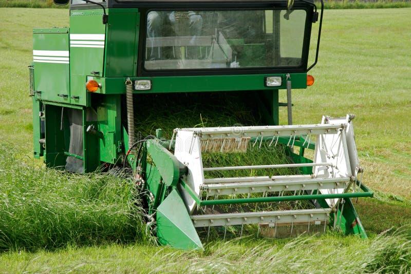 сено вырезывания Стоковая Фотография RF