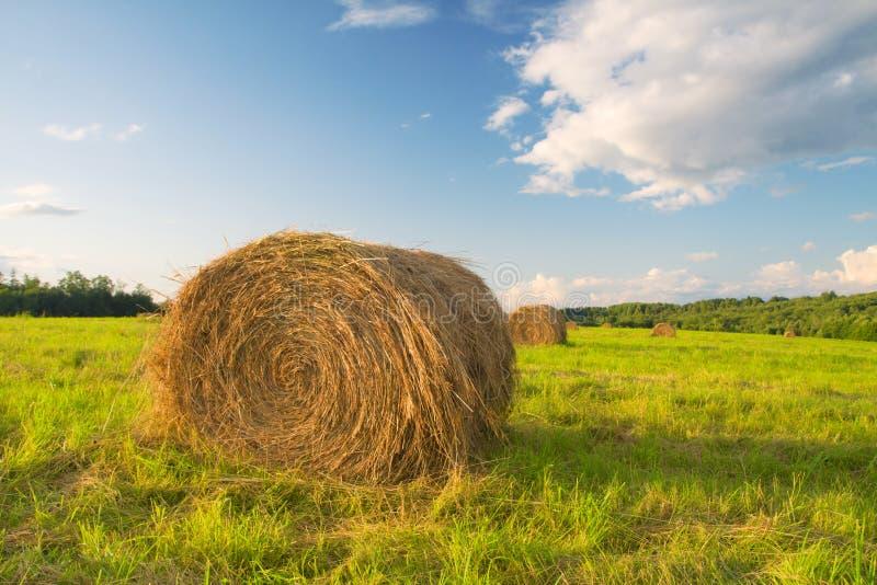 сено поля bales стоковые изображения