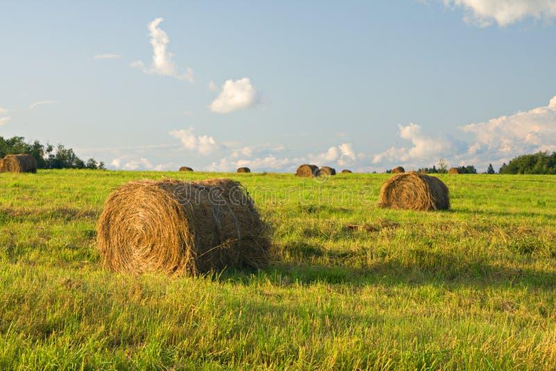 сено поля bales стоковое фото rf