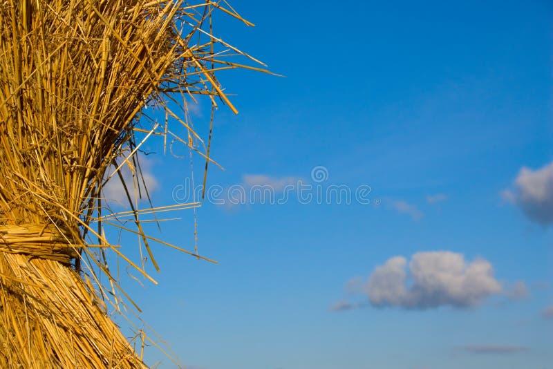 сено стоковые фото