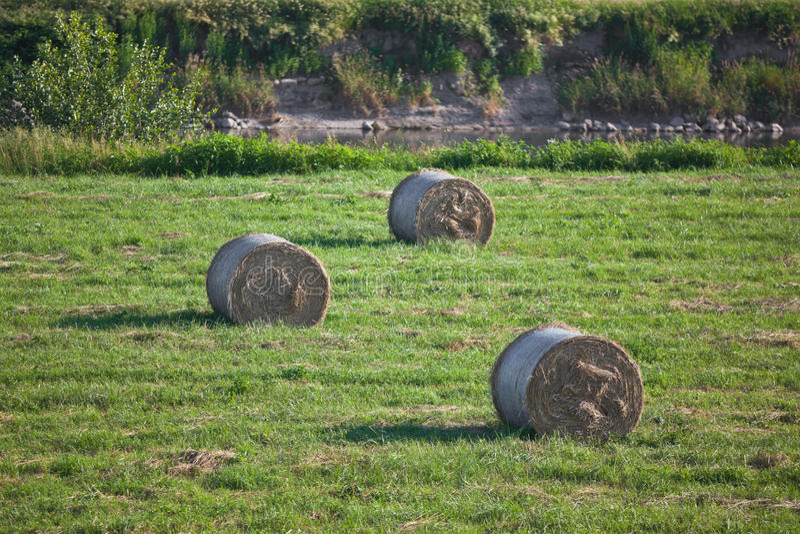 сено bales стоковые фото