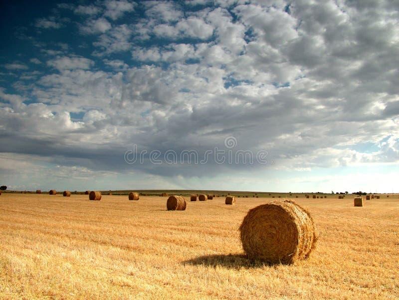 сено bales стоковая фотография