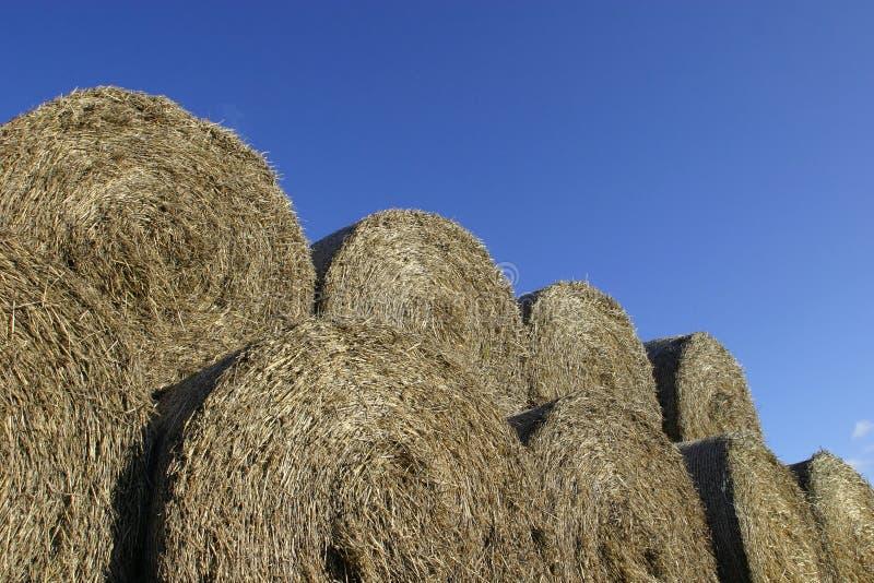 сено bales стоковое изображение