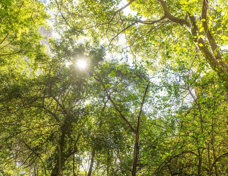 Сень Африка джунглей стоковое изображение rf