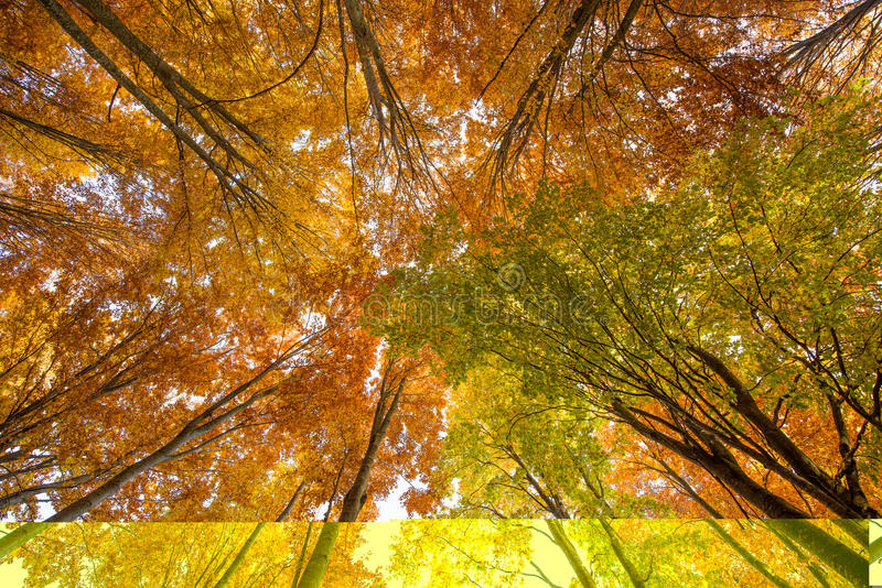 Сень дерева бука стоковое изображение rf
