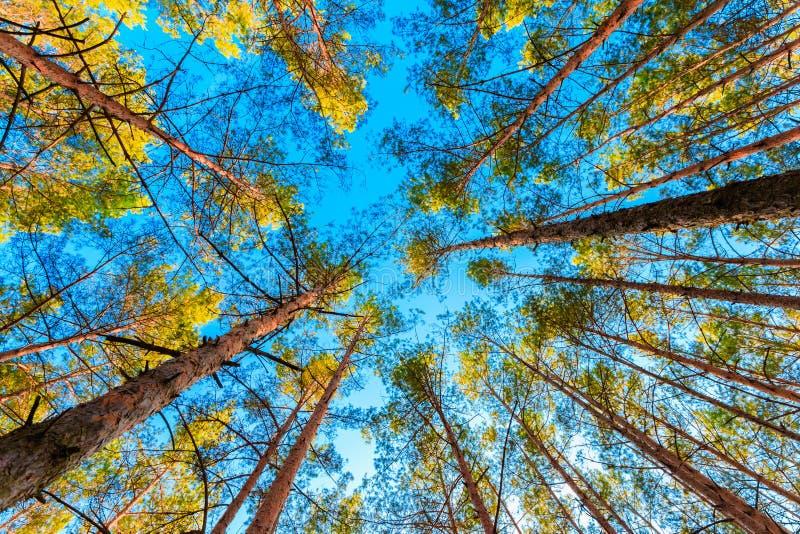 Сень дерева стоковая фотография