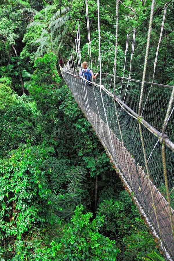 сень моста стоковые фото