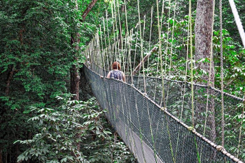сень моста стоковое фото