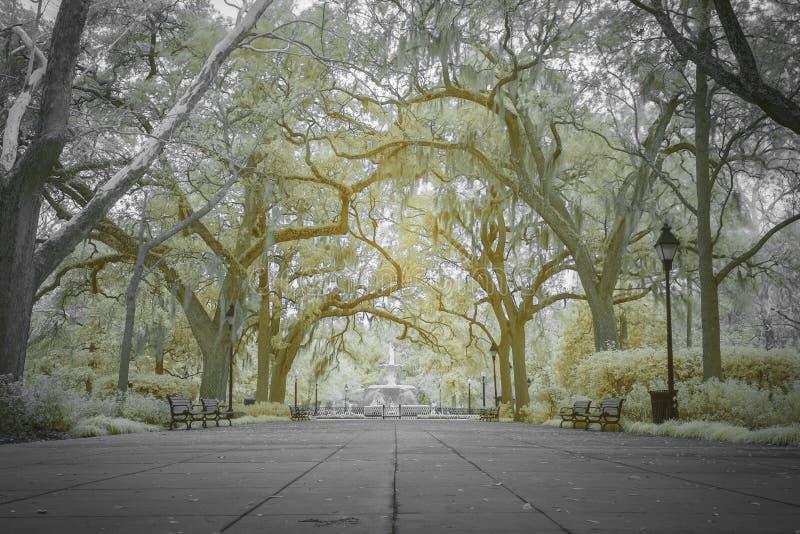 Сень дубов и фонтана на парке Forsyth стоковая фотография