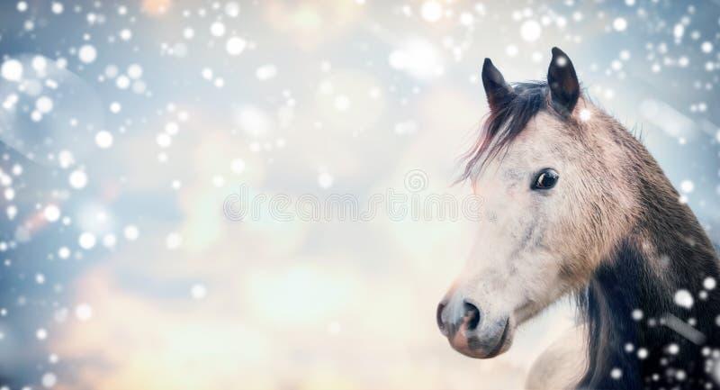 Серая голова лошади на предпосылке неба с снегом стоковые фотографии rf