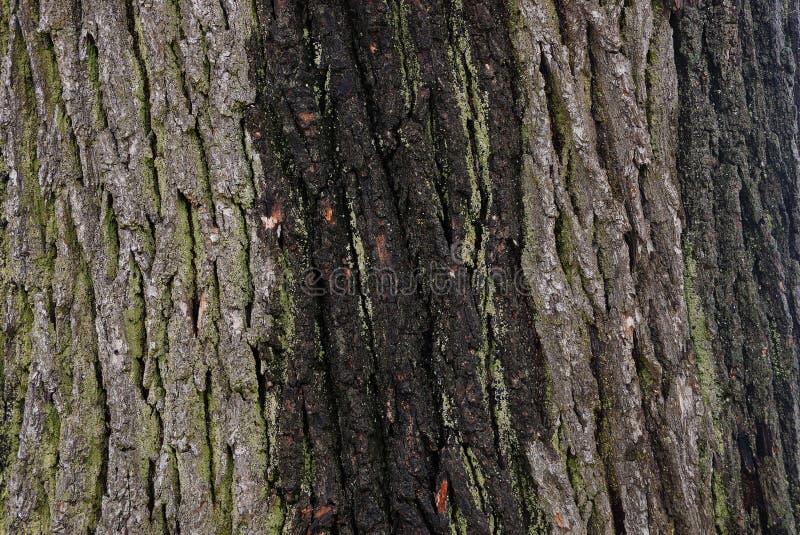 Серая зеленая естественная текстура коры и мха стоковые изображения