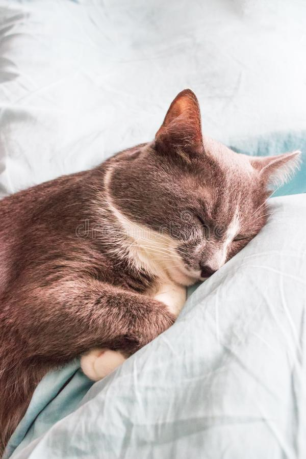 Серая кровать спать кота стоковая фотография rf